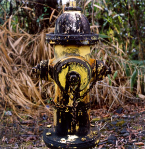 Mold-encrusted fire hydrant