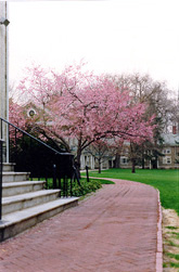 I loved the seasons at Haverford, especially spring and fall