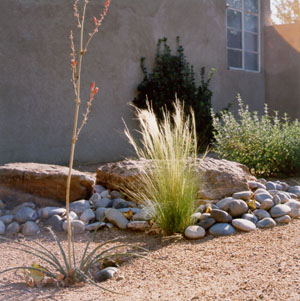 Xeriscape can be beautiful