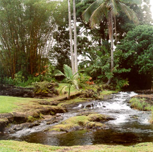 Looking at the stream in the backyard, facing mauka