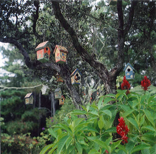 Many quirky birdhouses hung on an ohia
